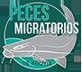 peces migratorios de bolivia